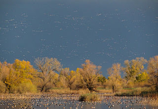 Flyway aerial route taken by migrating birds