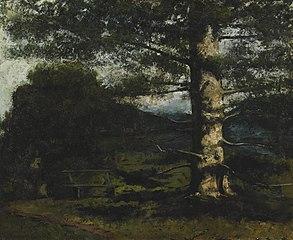 Cedar Tree at Hauteville