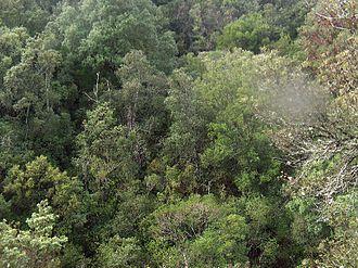 Maquis shrubland - High macchia in Sardinia