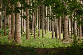 Hahnheide-Wald.jpg
