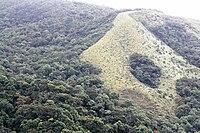 Hakgala Strict Nature Reserve 1.jpg