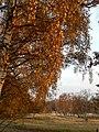 Herbstfarben Boberger Niederung.JPG