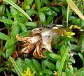 Hermit crab - Flickr - gailhampshire.jpg
