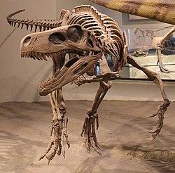 Herrerasaurus FMNH.jpg