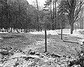 Het bebosde terrein aan de Heyenoordseweg waar het Dorp zal verrijzen bij Arnh, Bestanddeelnr 914-7429.jpg