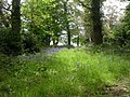 Hinton Park, bluebells - geograph.org.uk - 1295637.jpg