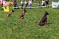HiperParada animalelor la CORA (4549127234).jpg