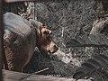 Hippopotamus in Kano Zoo.jpg