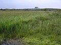 Holmsley Bog, New Forest - geograph.org.uk - 32771.jpg