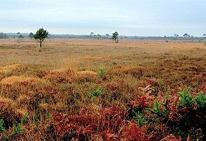 Dorset Heaths - View over the north side of Holt Heath