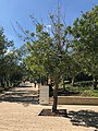 Holy Land Pilgrimage 2017 P092 Yad Vashem Raoul Wallenberg Tree.jpg