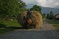 Horse-drawn wagon loaded with hay.jpg
