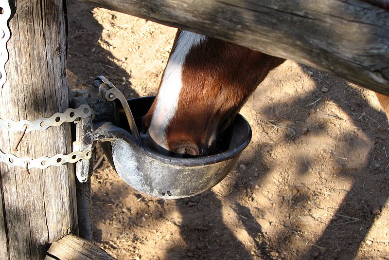 File:Horse-drinking-0A.jpg