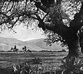 Horse riding at the Upper Galilee. 1900-1910 (id.22714853).jpg