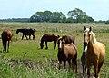 Horses at Darlow's Farm - geograph.org.uk - 844769.jpg
