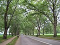 Hyde Park, Broad Walk - geograph.org.uk - 971599.jpg