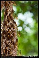 Hymenoptera (6022582580).jpg