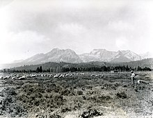 Sheep grazing near Stanley below the Sawtooth Mountains in a photo from circa 1937