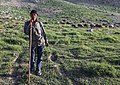 IMG 4303 Lar Plain, Iran (34004480761).jpg