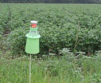 Integrated pest management - An IPM boll weevil trap in a cotton field (Manning, South Carolina).