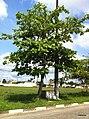 Iguape - SP - panoramio (113).jpg