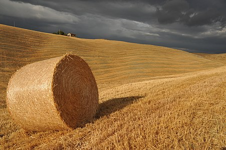 A hay bale in the Crete dell'Orcia Nature Reserve, Tuscany, Italy