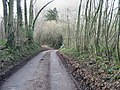 In the woods on Woodgate. - geograph.org.uk - 323566.jpg