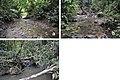 Indocloeon larval habitats (10.3897-zookeys.723.20578) Figure 6.jpg