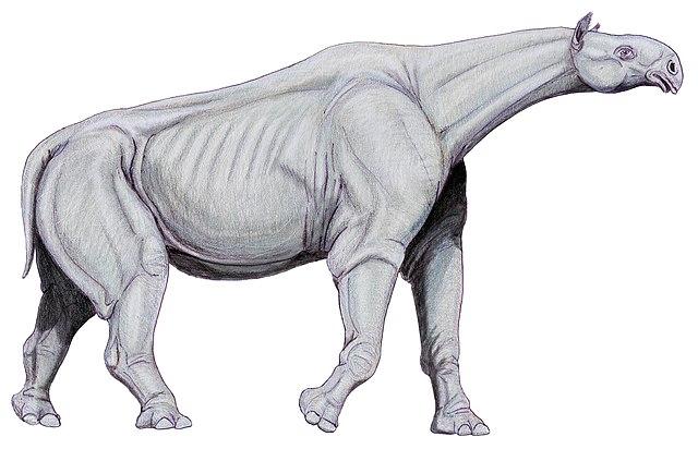 Resultado de imagen de Paraceratherium