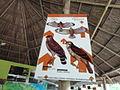 Información sobre Aves rapaces (cerro san gil).JPG