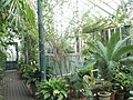 Inside the tropical glasshouse at Staunton Country Park - geograph.org.uk - 1592346.jpg