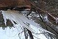 Jāņavārti ziemā,lāstekas. Icicles - panoramio.jpg