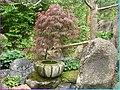 Japonská zahrada 2 - panoramio.jpg