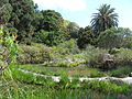 Jardín canario 83.JPG