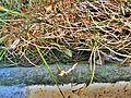 Jaszczurka na Kopcu Piłsudzkiego - panoramio.jpg