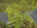 Jeu d'eau sur mousse hydrofuge... - panoramio.jpg