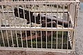 Jhansi fort wikijib-76.jpg