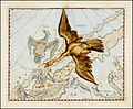 Johannes Hevelius - Cygnus.jpg