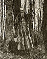 Joseph F. Smith in the Sacred Grove.jpg