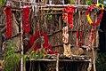 Jungle Cat in makeshift shrine during high tide in Sundarban.jpg
