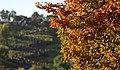 KOCIS Korea Autumn SkyPark 17 (10471407646).jpg