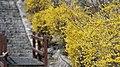 KOCIS Korea Seoul Spring Flowers 01 (8662711646).jpg