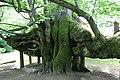 Kamenice nad Lipou - památná lípa (007).jpg