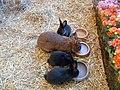 Kaninchen im Kornmarktcenter in Bautzen am 27. März 2018 (8).jpg