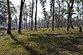Kannur Elephant training grounds (22019713682).jpg