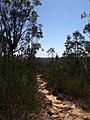 Kariong Ridge - panoramio (1).jpg