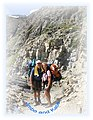 Katie and Jimbo approaching the Continental Divide at Swiftcurrent Pass, July 25th, 2007 - panoramio.jpg