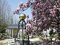 Katzscher Garten Magnolienbluete.jpg