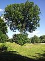 Keller Lake (Golfview) - Maplewood, MN - panoramio (2).jpg
