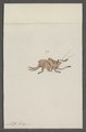 Kend - Print - Iconographia Zoologica - Special Collections University of Amsterdam - UBAINV0274 066 01 0087.tif